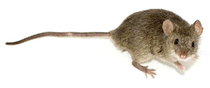 Mice, post hoc tests and diffograms - deepsense ai